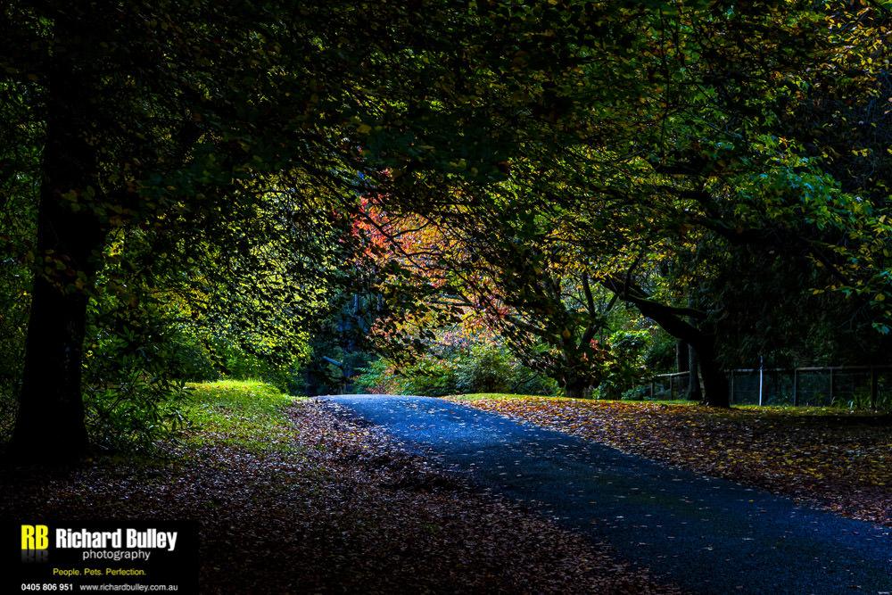 Blue Mountains Portrait Photography